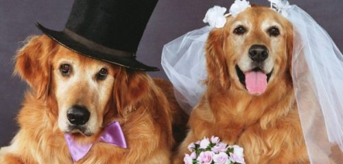 """""""So you're going to marry a dog?!"""""""